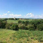 via-francigena-colline-fidenza